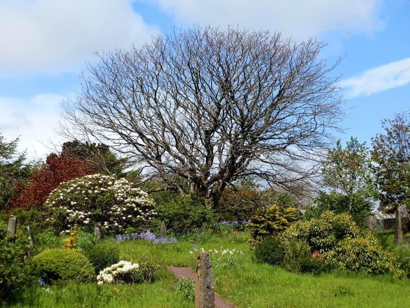 Un vieil arbre dans un vieux cimetière photo stock