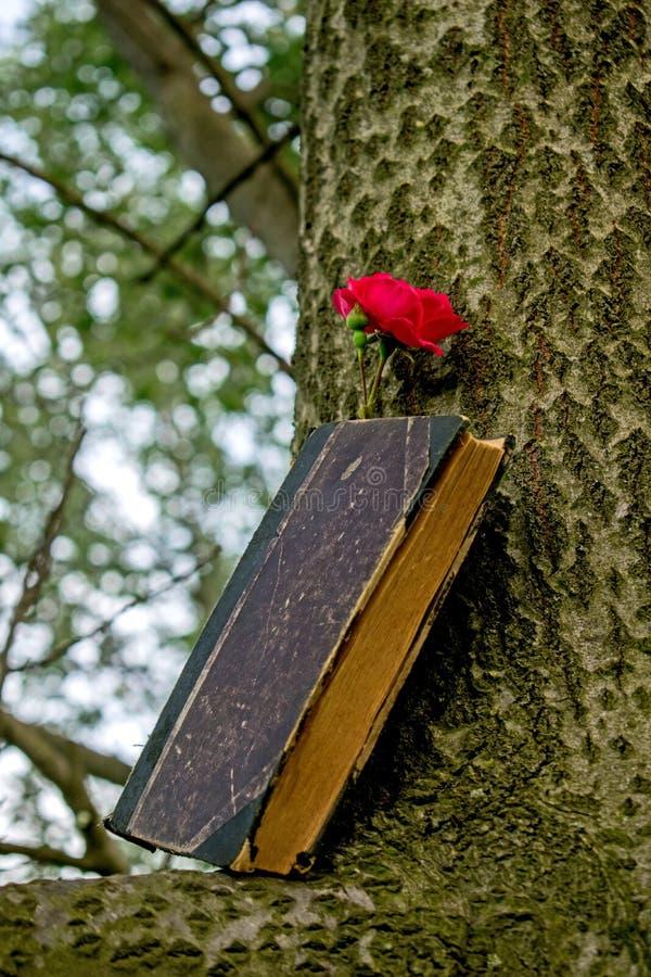 Un vieux livre réglé sur une branche, une rose rouge tout près photo stock