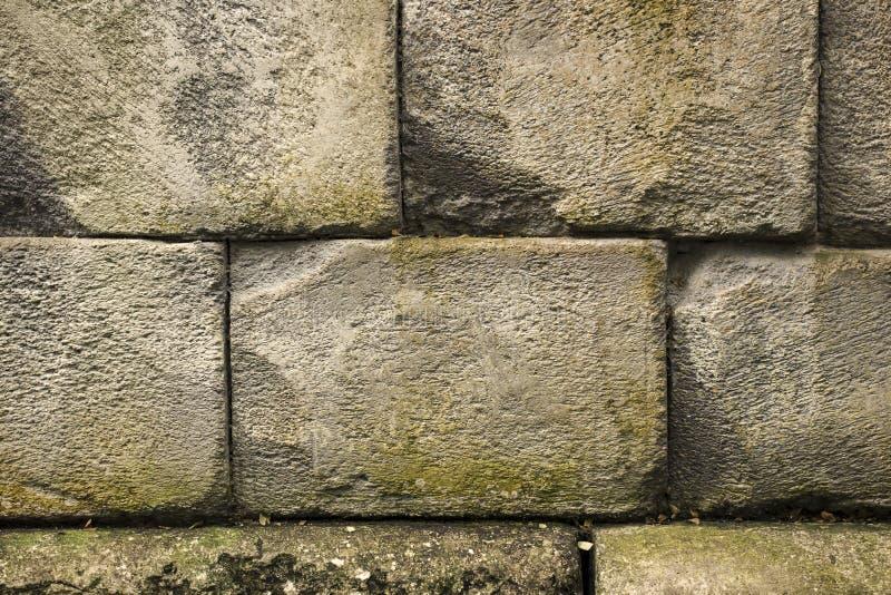Un vieux mur de la brique blanche a tourné vert avec l'humidité au fil du temps wallpaper image stock