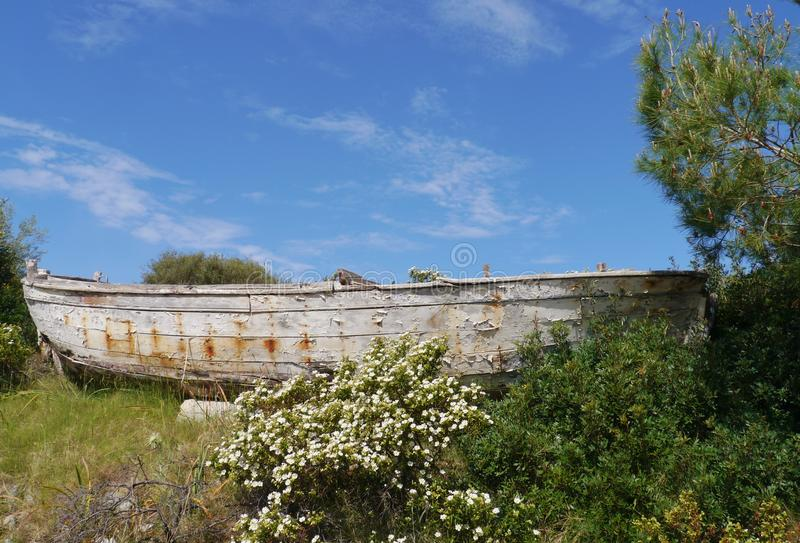 Un vieux navire en bois derrière un rosier de roche images libres de droits