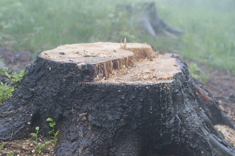 Un vieux tronçon dans la forêt photos stock