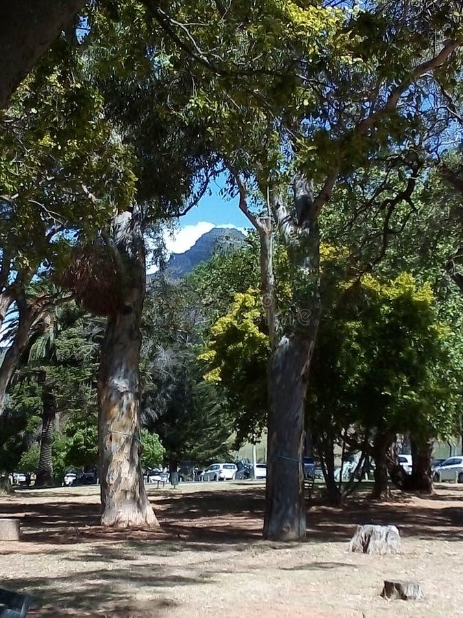 Un vistazo perfecto a través de los árboles fotos de archivo libres de regalías