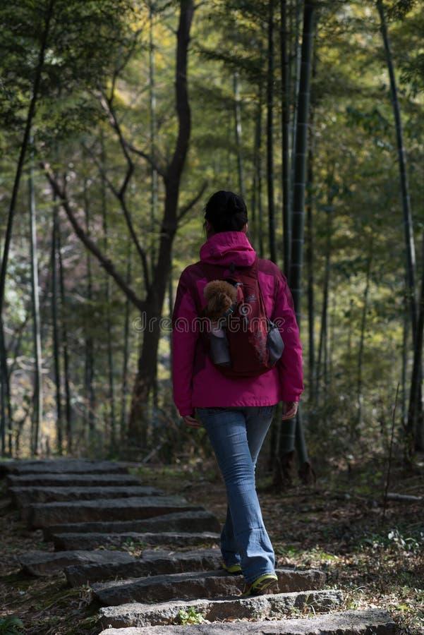 Un voyageur dans un verger en bambou photos stock