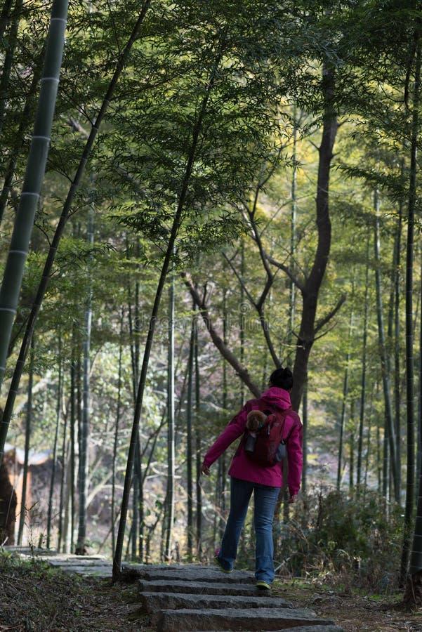 Un voyageur dans un verger en bambou photographie stock libre de droits