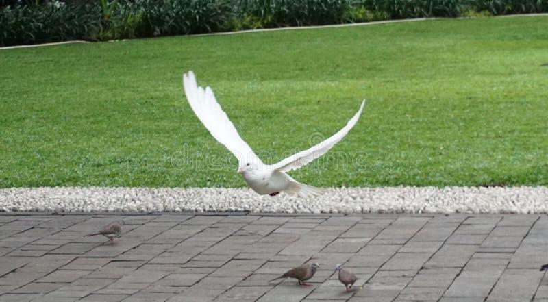 Un vuelo blanco del comienzo del pájaro foto de archivo libre de regalías