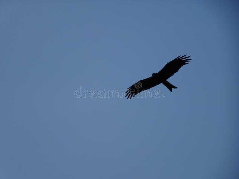 Un vuelo del pájaro en la silueta del cielo imagen de archivo libre de regalías