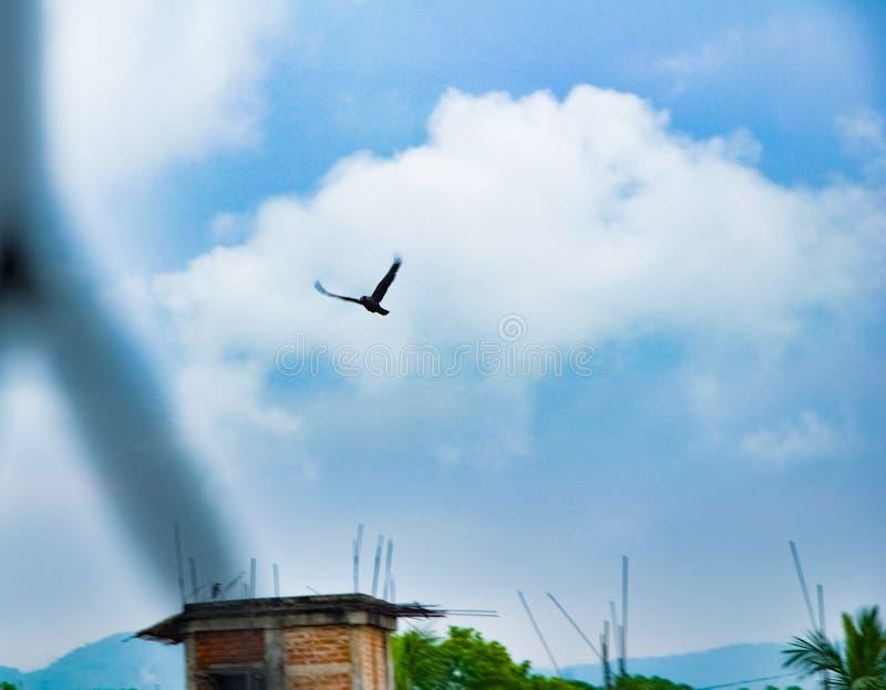 Un vuelo negro del cuervo del pájaro en el cielo fotos de archivo libres de regalías