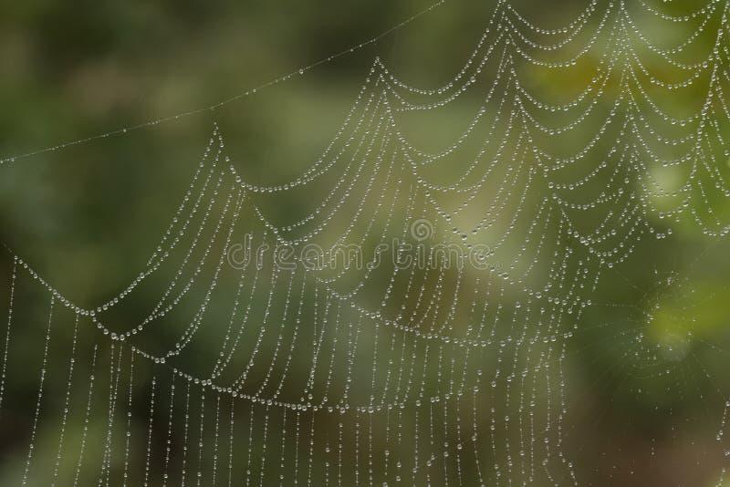 Un web di ragni su un fondo verde immagini stock libere da diritti