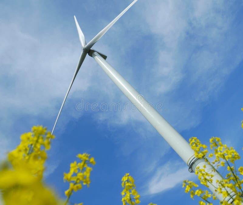 Un windturbine en un campo de la violación foto de archivo libre de regalías