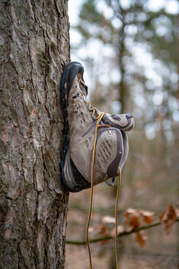 Un zapato atado al tronco de un árbol foto de archivo