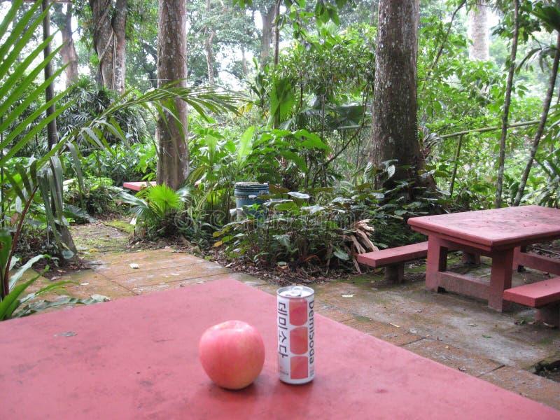 Una área de picnic en los jardines botánicos de Makiling, Filipinas fotografía de archivo