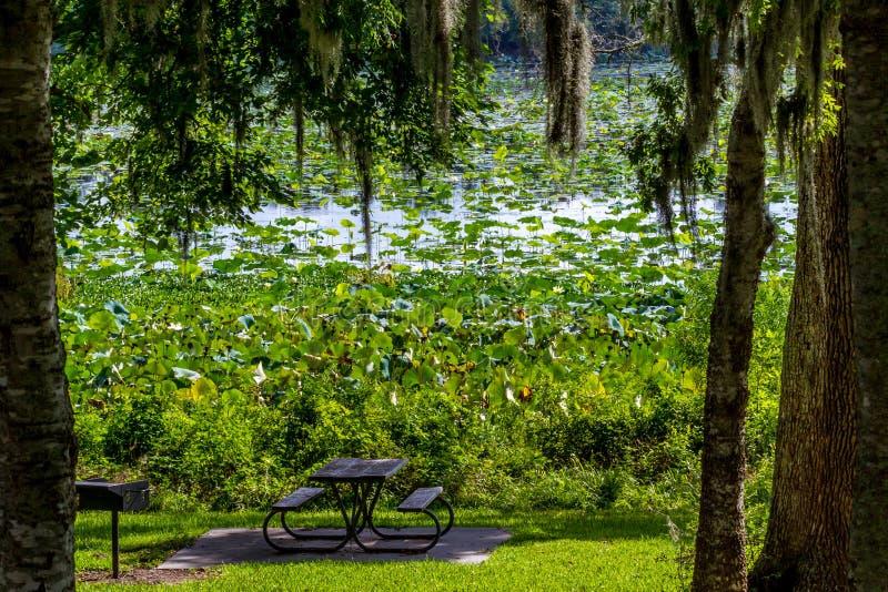 Una área de picnic hermosa del parque con los árboles, el musgo español, Lotus Water Lily Pad Flowers amarilla floreciente y otras fotografía de archivo