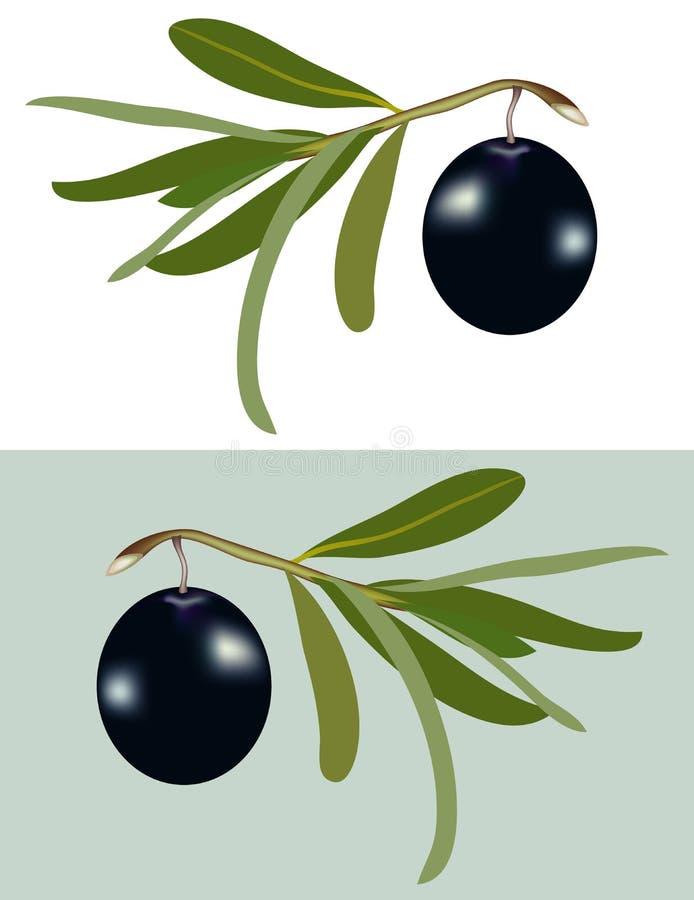 Una aceituna negra libre illustration