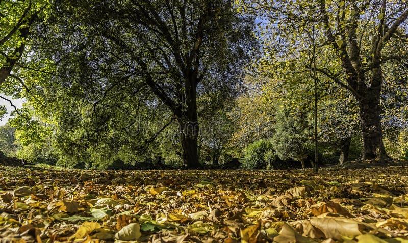 Una alfombra de las hojas de otoño en el parque del verde del ` s de St Stephen, Dublín, Irlanda fotografía de archivo libre de regalías