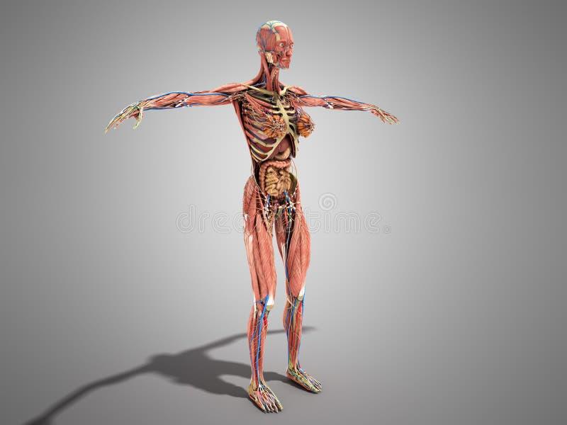 Dorable Grises Anatomía 2014 Festooning - Imágenes de Anatomía ...