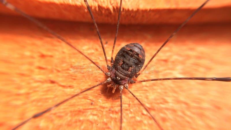 Una araña de jardín fotografía de archivo