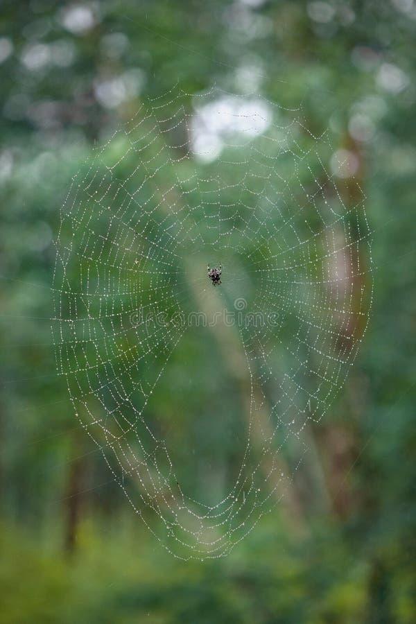 Una araña en su web fotos de archivo