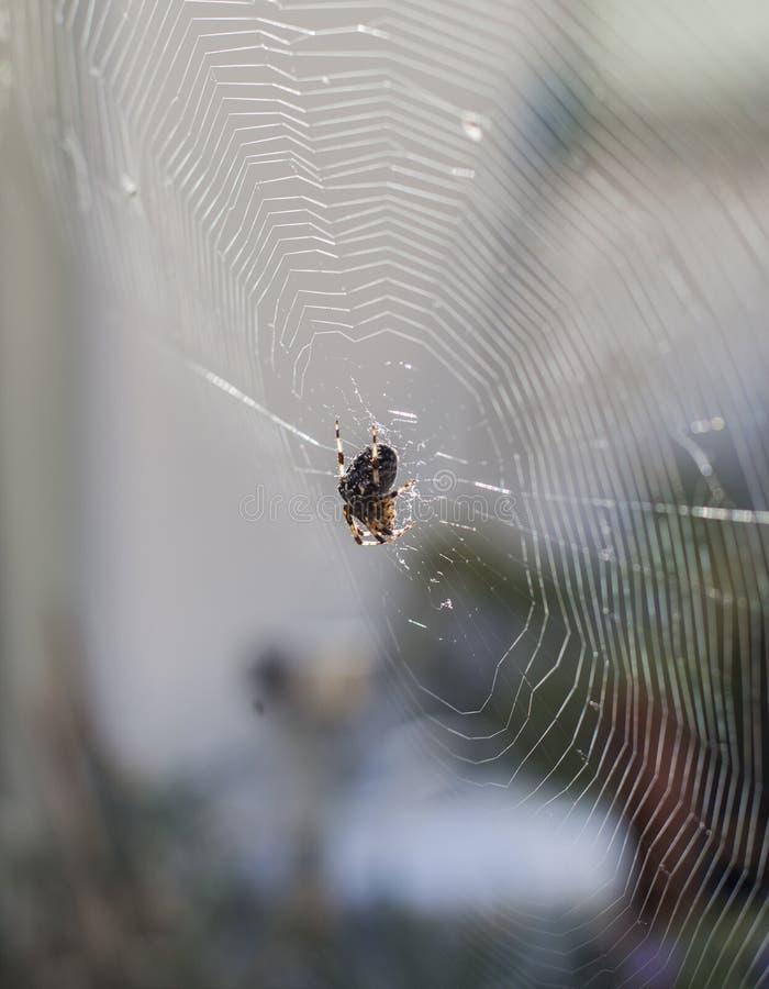 Una araña en un web en un jardín en un día soleado imagen de archivo libre de regalías