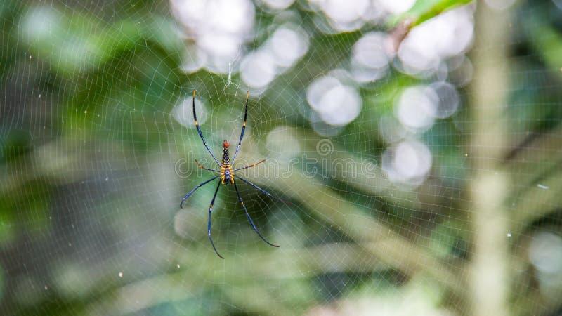 Una araña gigante femenina de maderas en el bosque de la montaña de Taipei fotos de archivo