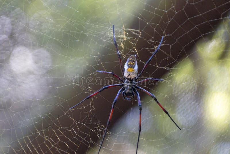 Una araña grande imagenes de archivo
