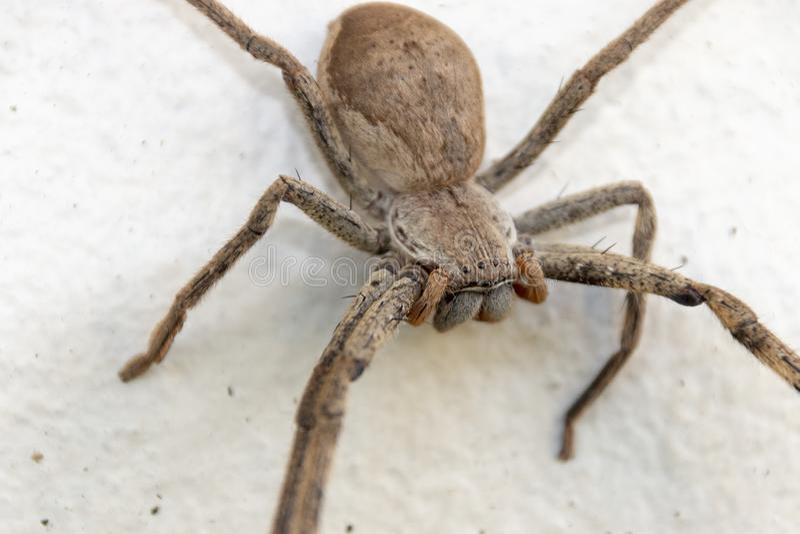 Una araña grande foto de archivo