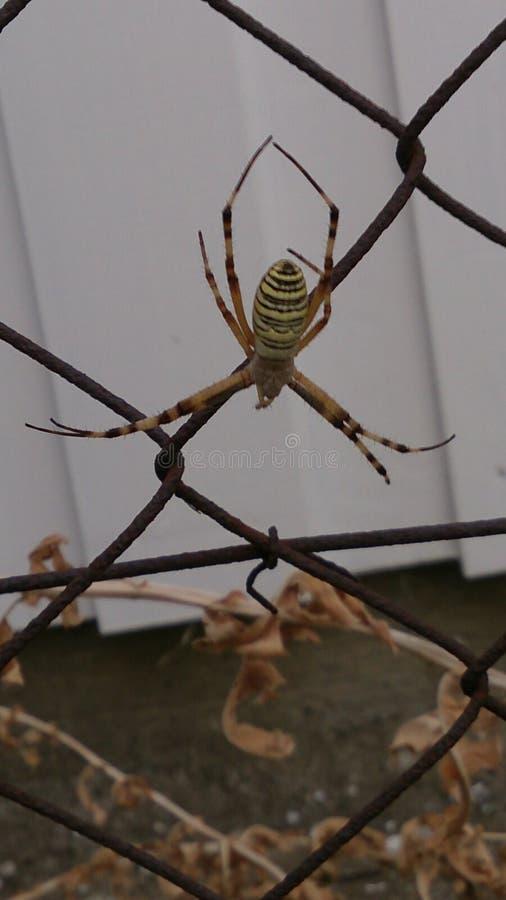 Una araña sospechosa fotografía de archivo libre de regalías