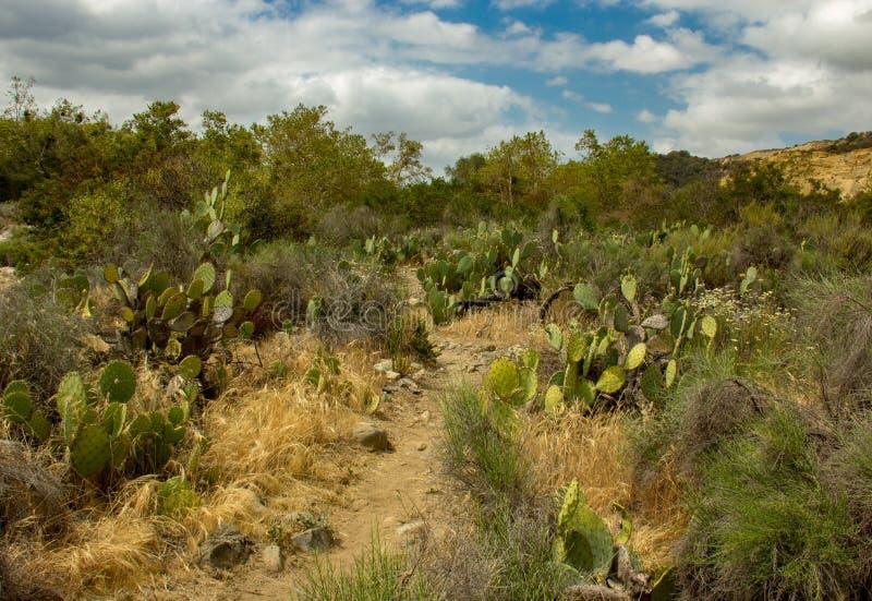 Una arboleda del cactus dentro del parque del desierto de Caspers foto de archivo libre de regalías