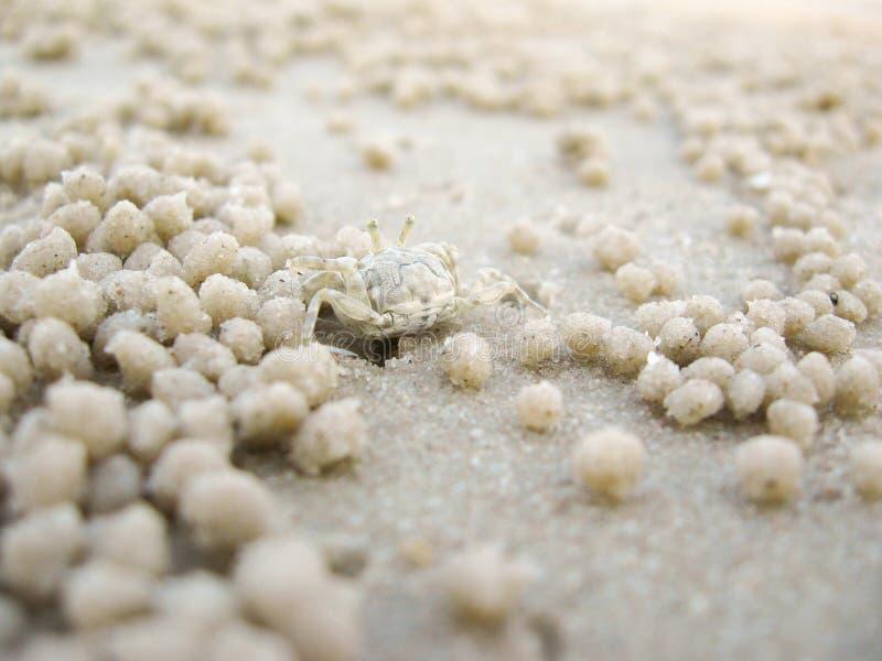 Una arena de excavación del cangrejo del fantasma para hacer un agujero en la playa Hua Hin, Tailandia fotos de archivo