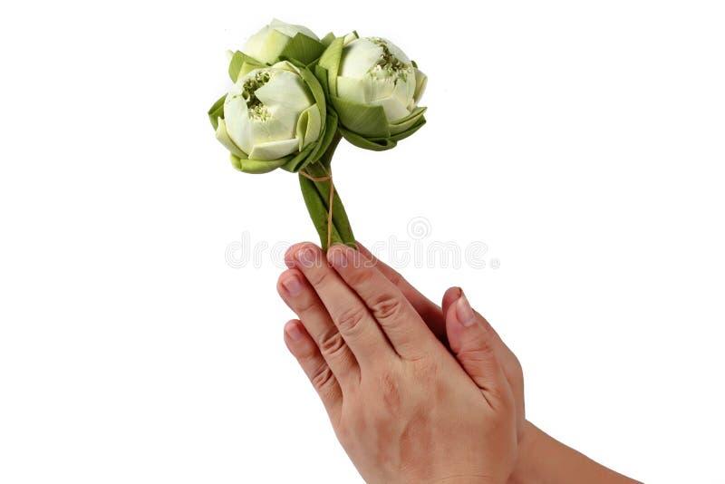 Una as palmas das mãos na saudação com lótus fotos de stock royalty free