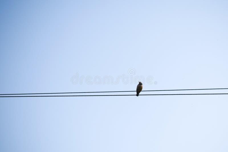 Una ave migratoria que se sienta en un cable eléctrico fotos de archivo