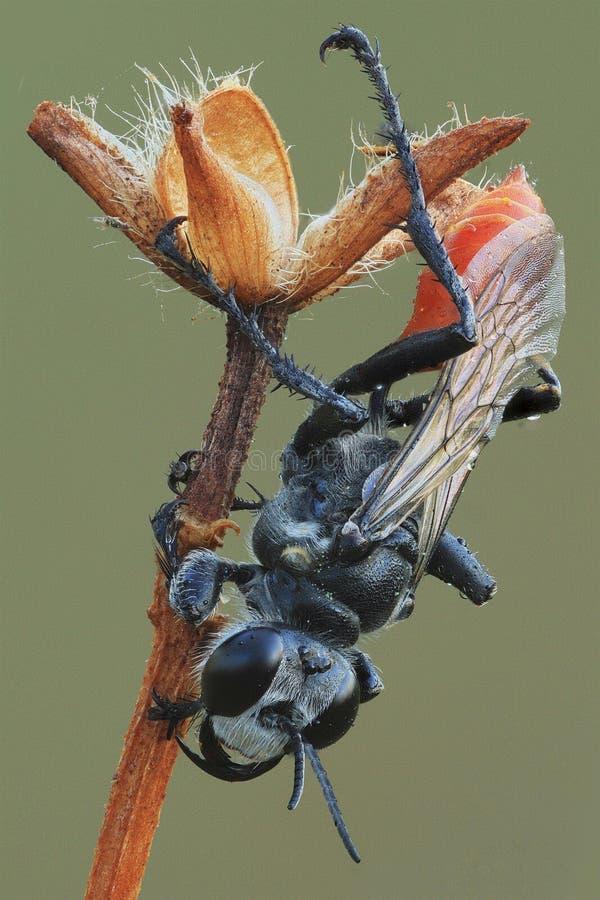 una avispa negra en la rama fotografía de archivo