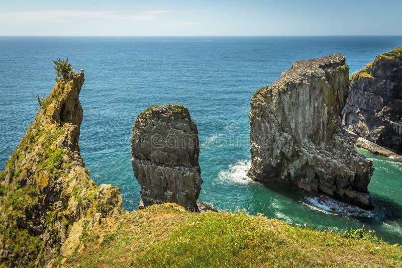 Una baia con una roccia impila al largo popolato dai gabbiani crescere di Raverbill sulla costa di Pembrokeshire, Galles fotografie stock