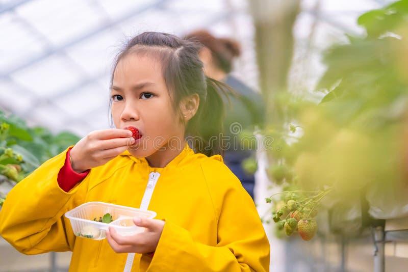 Una bambina che mangia fragole fresche nella fattoria giapponese delle fragole immagini stock