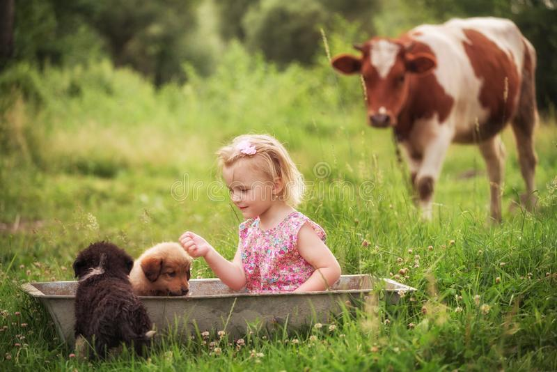 Una bambina in una depressione su un prato verde bagna i piccoli cuccioli Nei precedenti, una mucca pasce Lo spirituale dell'azie immagine stock