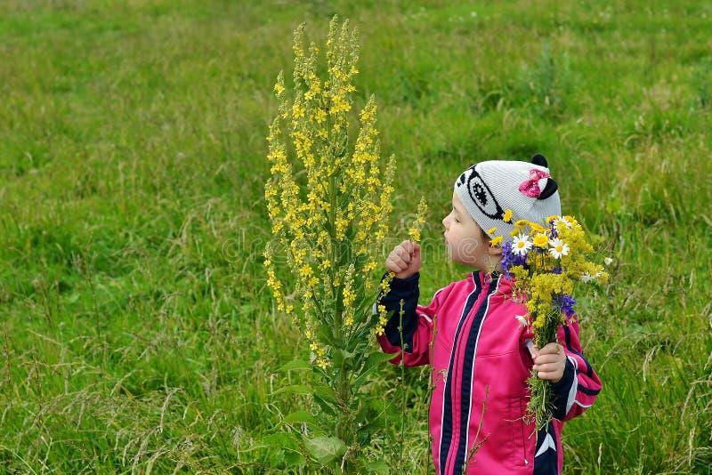 Una bambina vede un fiore fotografie stock libere da diritti