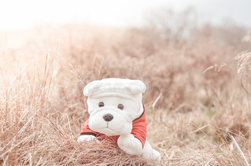 Una bambola del cucciolo su un campo di erba di estate immagine stock libera da diritti