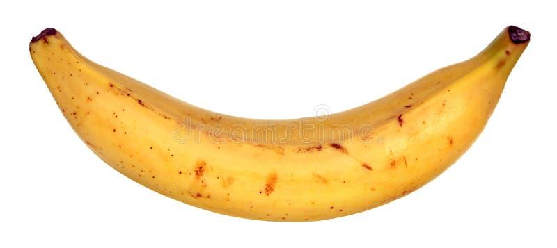 Una banana del plantano immagine stock libera da diritti