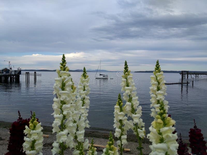 Una barca fra i fiori immagini stock