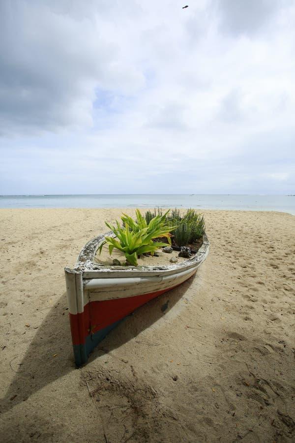 Una barca rotta, su cui alcuni fiori e piante si sviluppano fotografia stock