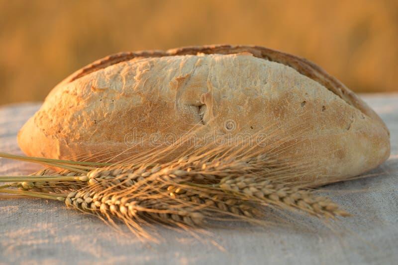 Una barra de pan en el sol foto de archivo libre de regalías