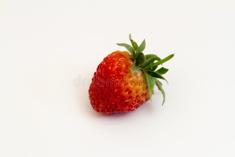 Una baya madura de la fresa foto de archivo