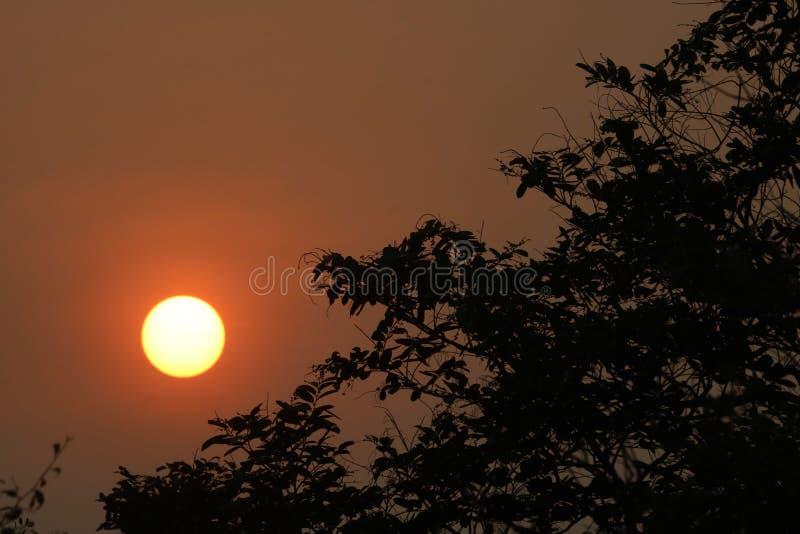 Una bella alba nella foresta immagini stock
