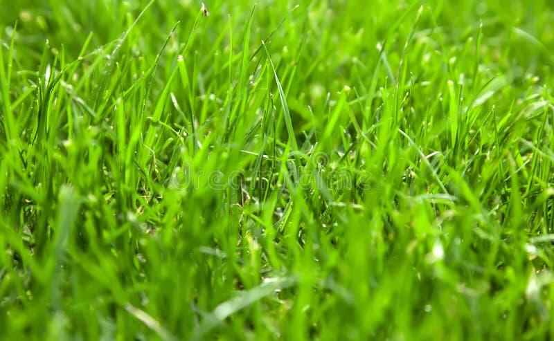 Una bella erba verde chiusa in un giorno di sole fotografie stock