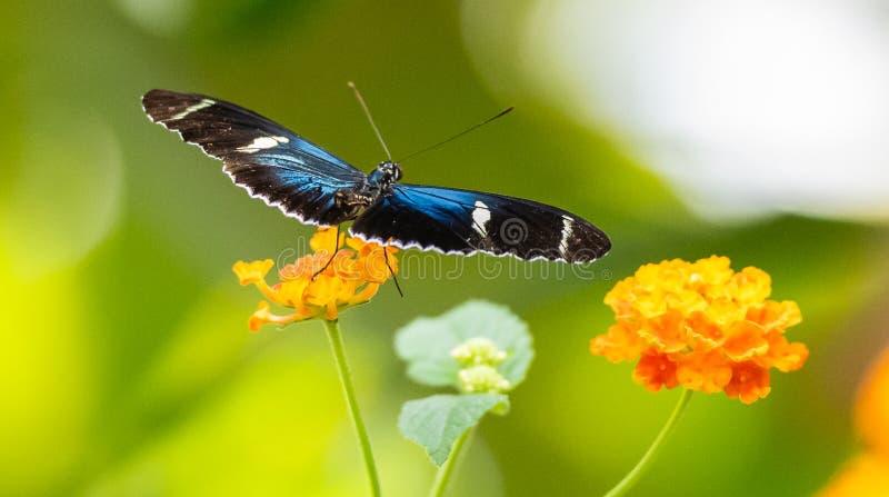 Una bella farfalla su una foglia immagini stock
