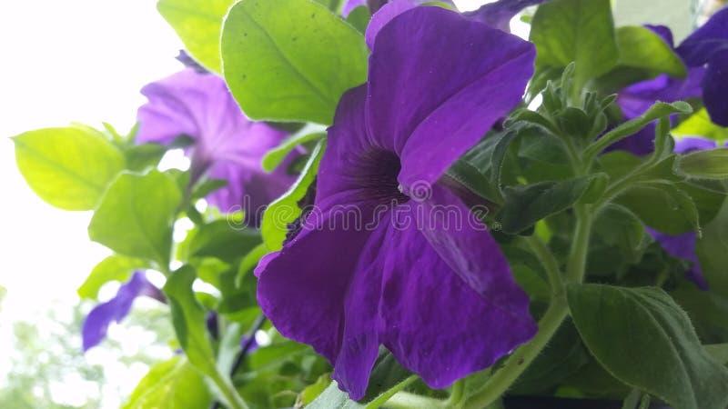 Una bella fine del fiore su fotografie stock libere da diritti