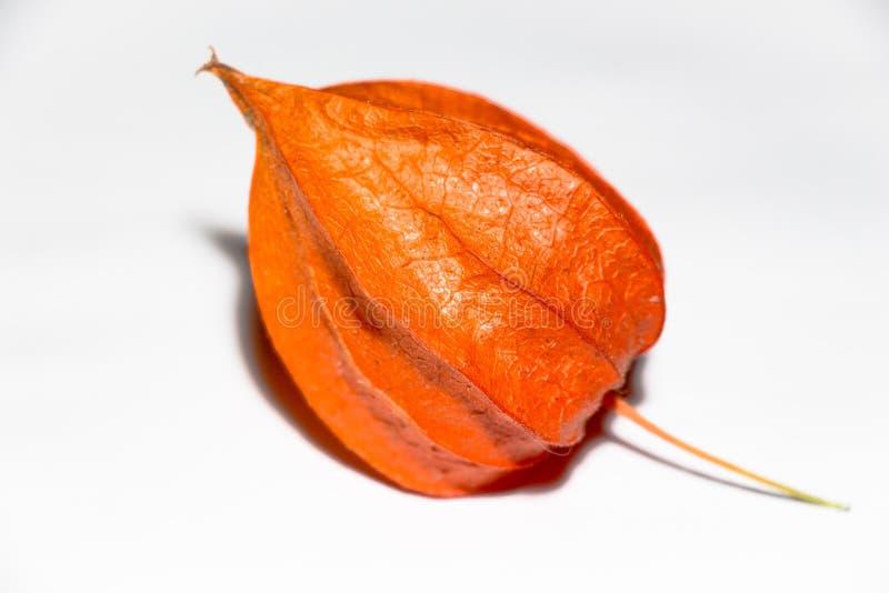 Una bella frutta del fiore che ha raggiunto la terra in autunno immagine stock libera da diritti