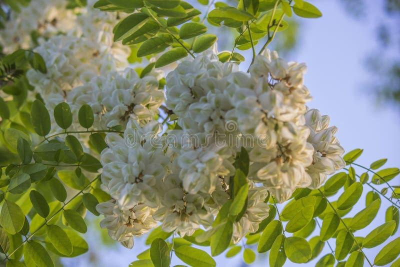 Una bella immagine della fioritura della molla immagini stock