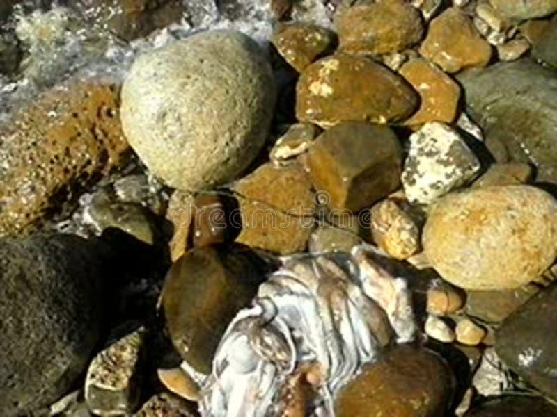 Una bella pescato di polpi arkivbild
