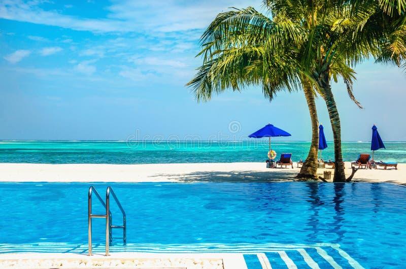 Una bella piscina sui precedenti delle palme azzurrate dell'acqua e dell'oceano fotografia stock libera da diritti