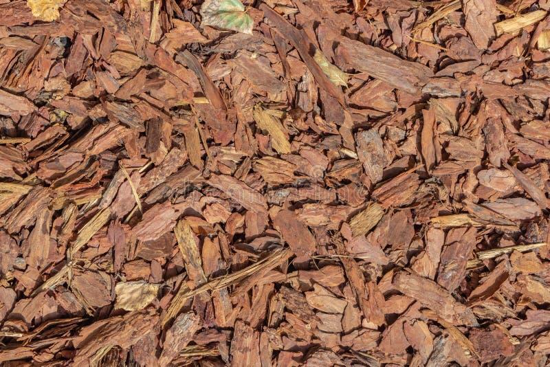 Una bella struttura orizzontale della corteccia marrone dell'albero della conifera con i nodi e le crepe per la pacciamazione del fotografia stock